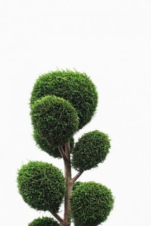 Essential information on pruning and trimming trees
