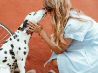 Three reasons to send your pet dog to an animal chiropractor!