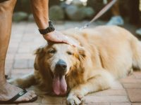 Tips for Taking Care of a Senior Dog